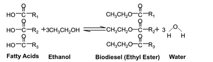 esterification of oleic acid for biodiesel Correction for 'mesoporous ag1(nh4)2pw12o40 heteropolyacids as effective catalysts for the esterification of oleic acid to biodiesel' by qiu-yun zhang et al, rsc.